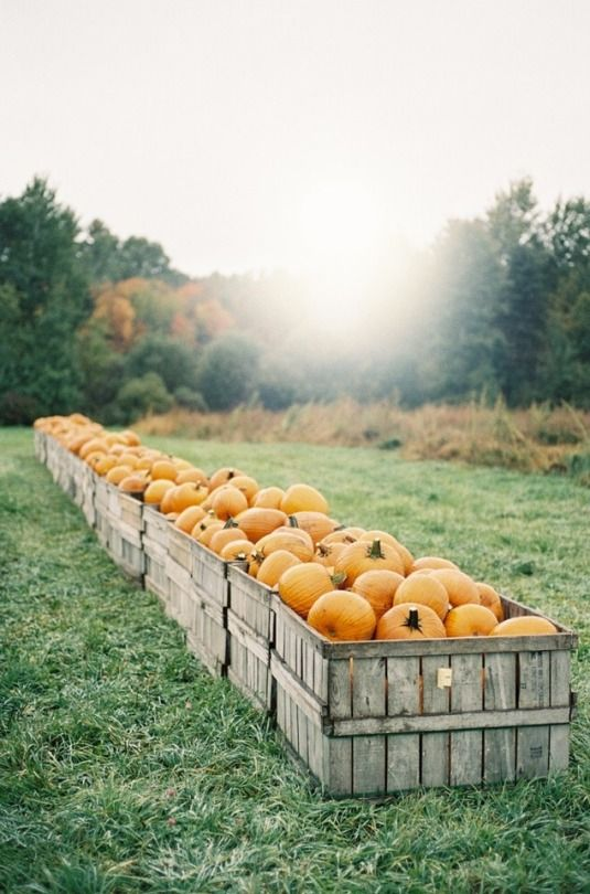 My 12 Favorite Fall Activities